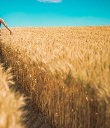 farming-systems