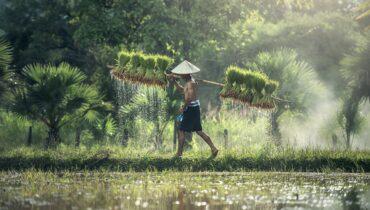 farmer, harvest, agriculture